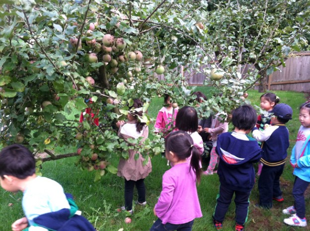 2013-apple-picking